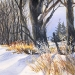 wintertreeline